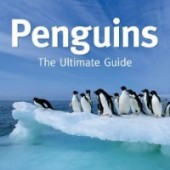 penguins102114