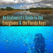 guide to the everglades